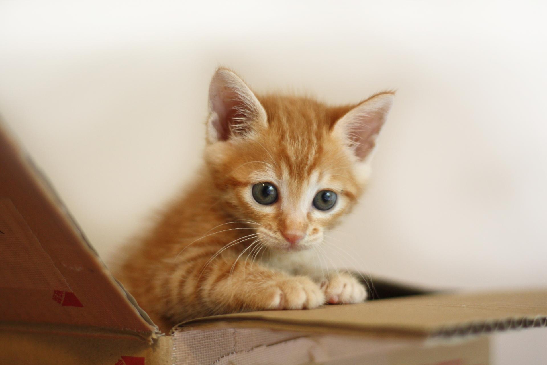 ワンちゃん猫ちゃんへのプレゼント