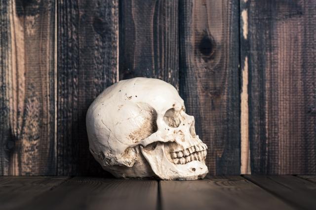 頭蓋骨と脳